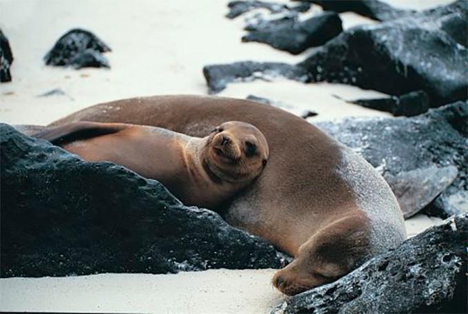 Cute Sea Lions