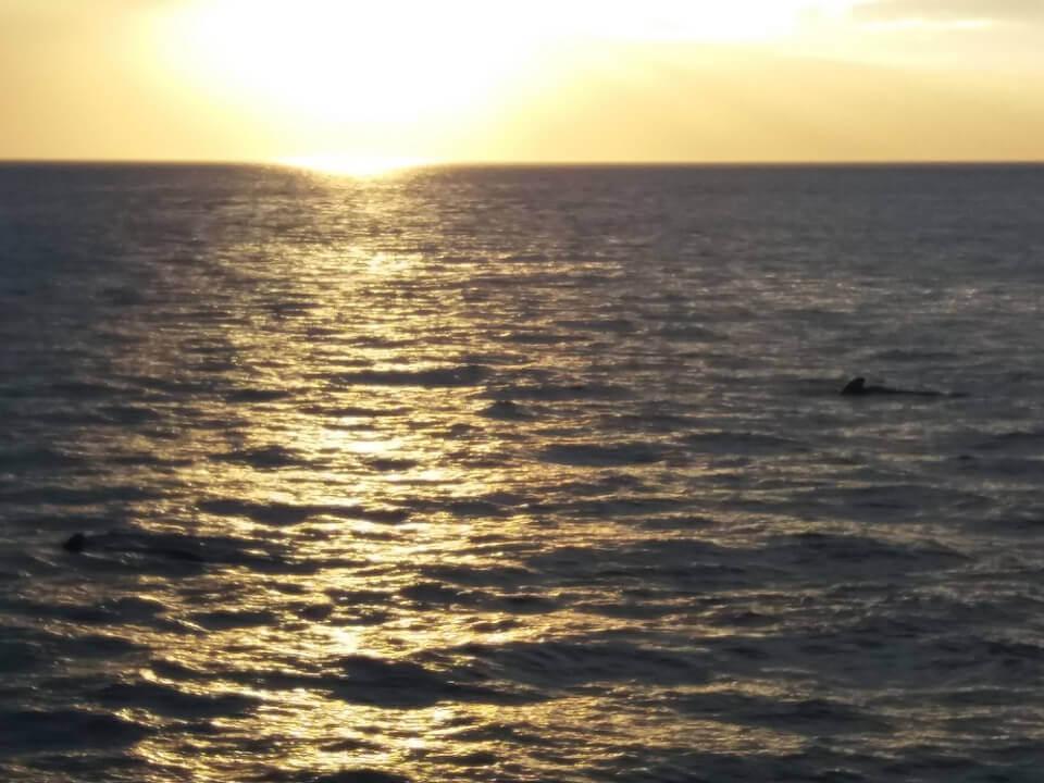 morning whale watching galapagos