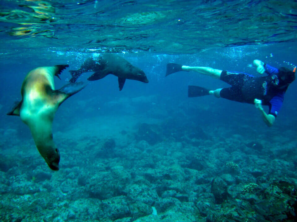 Galapagos activites: snorkeling