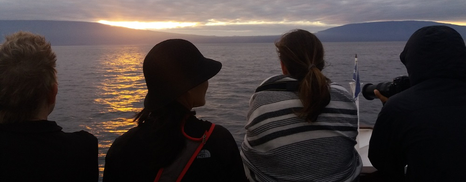 Whale watching during sunrise in the Galapagos islands