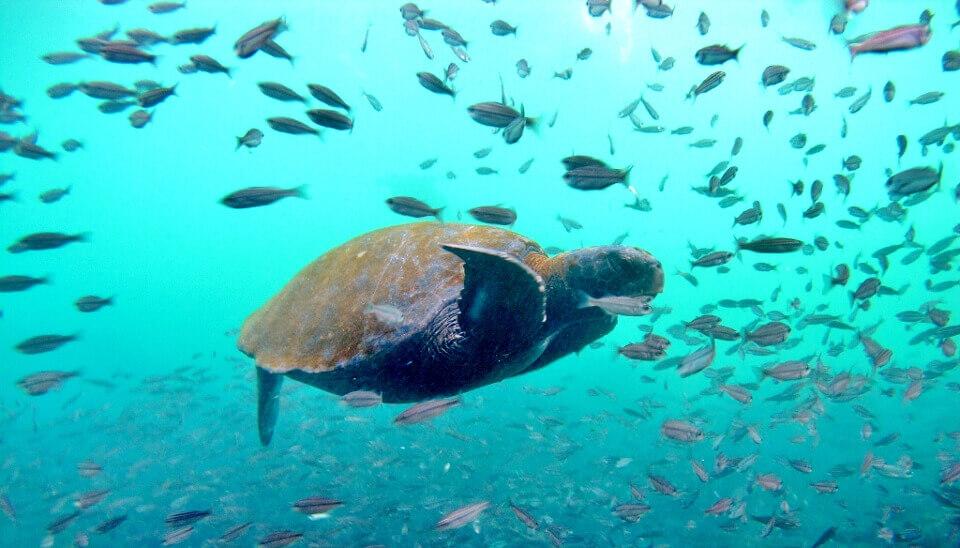 sea life galapagos