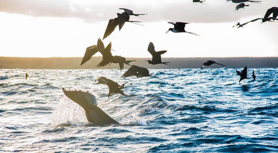 orcas frigatebirds galapagos