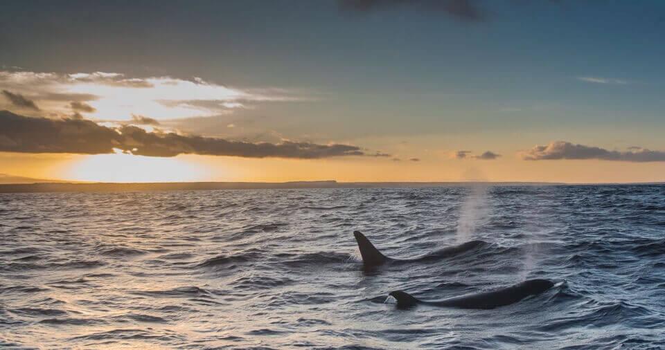 galapagos islands orcas