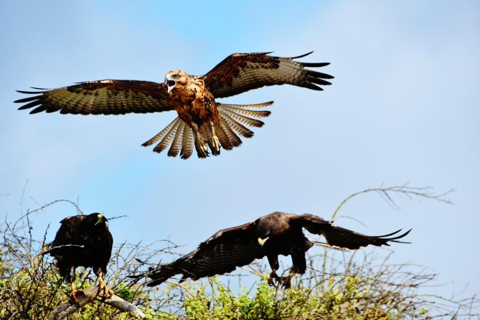 Mother sea lion fights off hawks