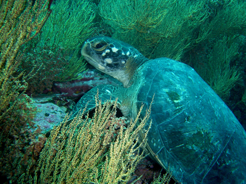 Galapagos islands sea turtle