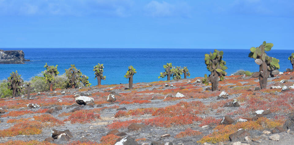 View of the Galapagos islands