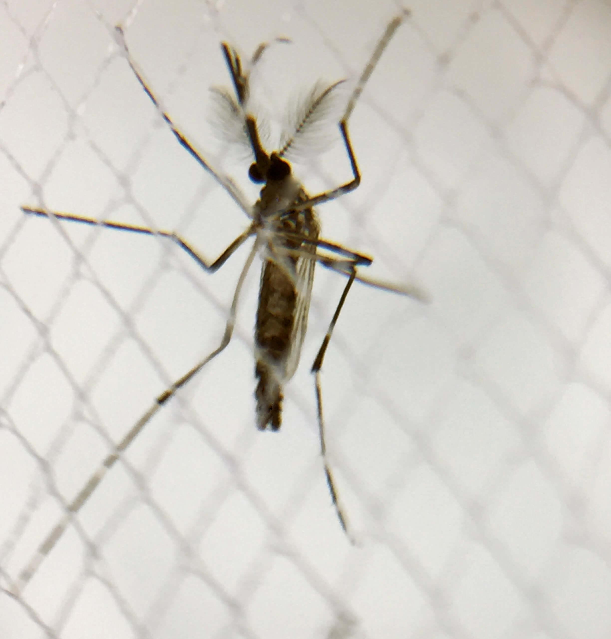 zika virus in galapagos and ecuador in 2018