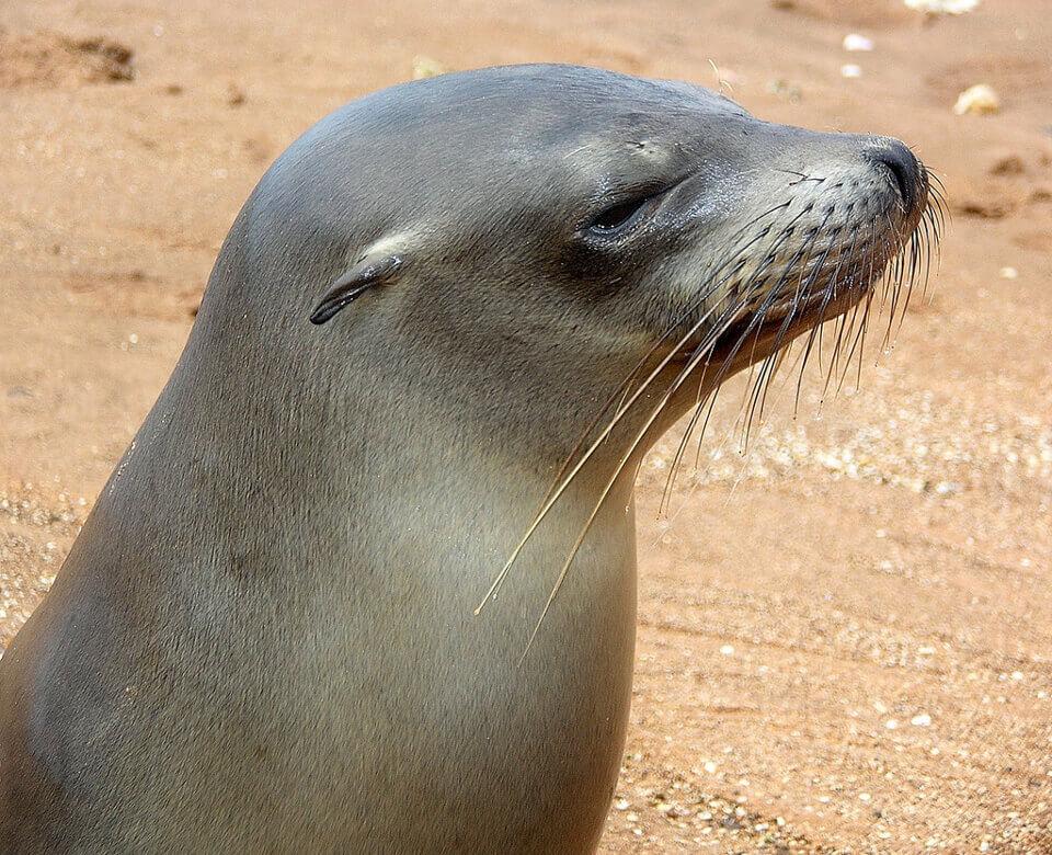 заведение начало ушастые тюлени фото базовые