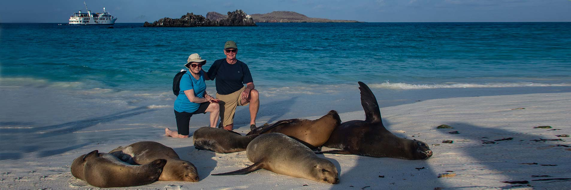 Galapagos wildlife: sea lions