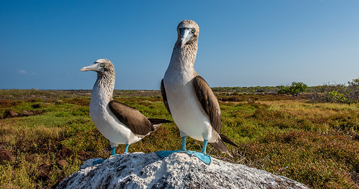 Galapagos tours itineraries: North Seymour island