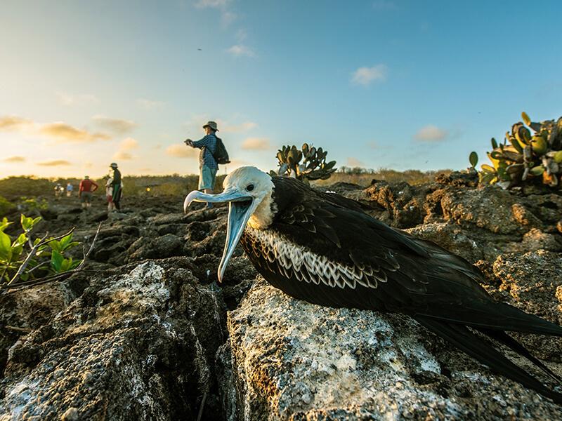 Galapagos Islands: Darwin Bay