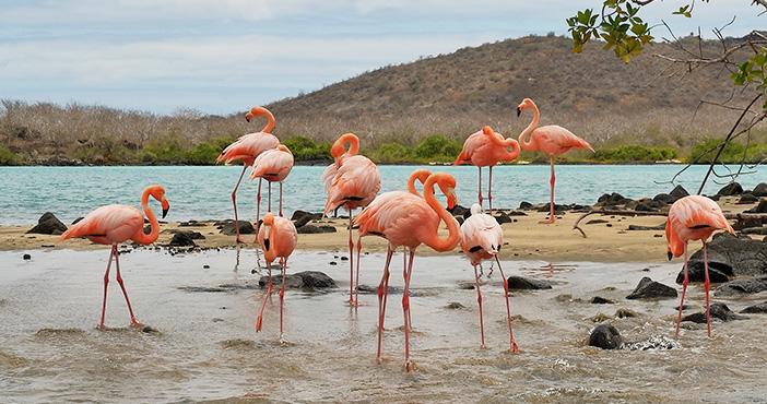 Galapagos tours itineraries: Galapagos flamingos
