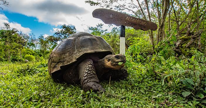 Galapagos tour itinerary: giant tortoise
