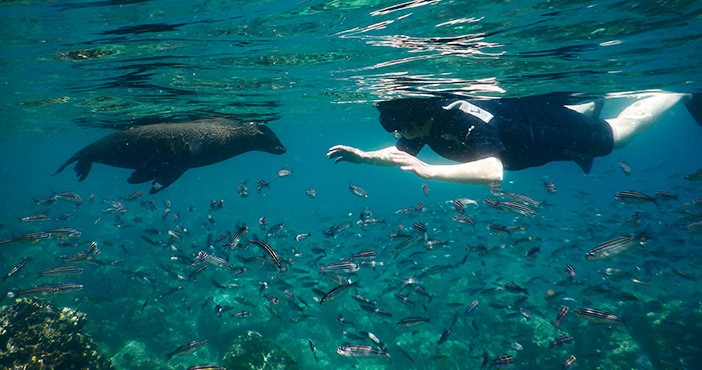 Galapagos tours itinerary: snorkeling