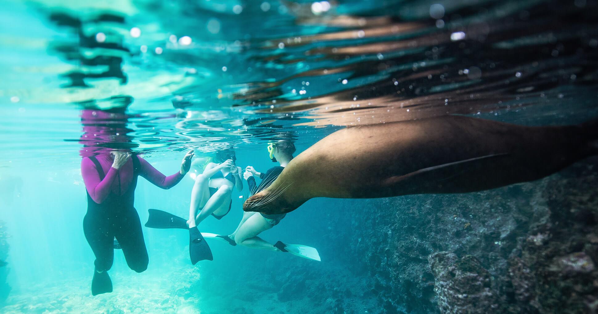 Galapagos Islands activities: snorkeling