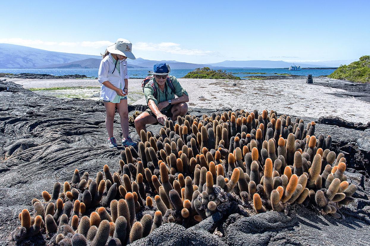 Lava cactus at Galapagos Islands