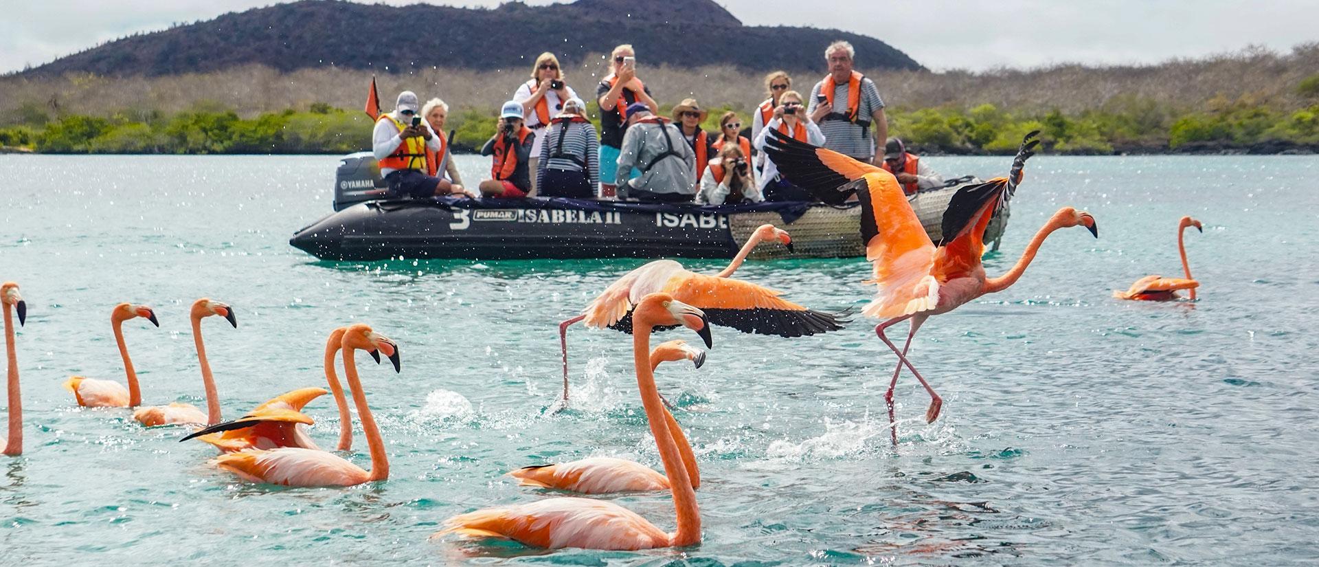 Galapagos flamingos in Floreana Island