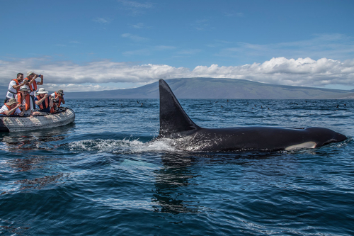 Whale-watching during a panga ride