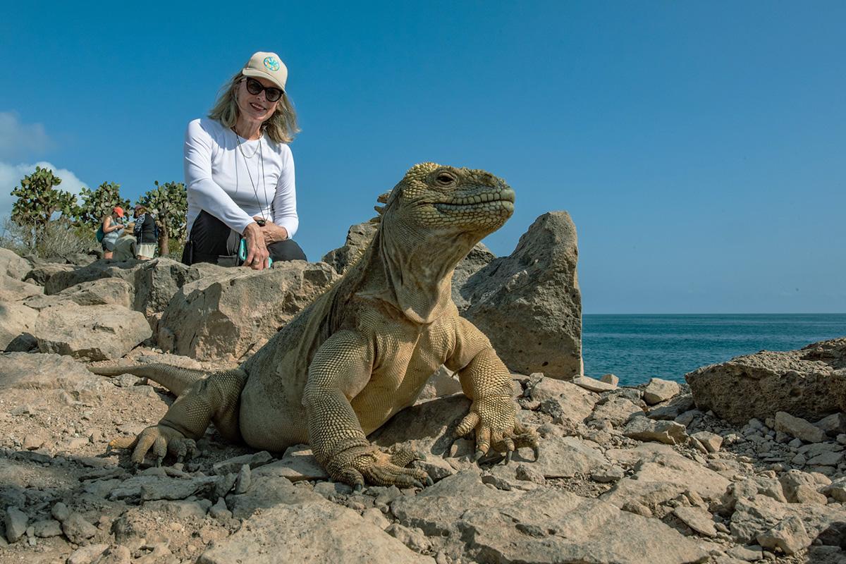 Endemic Iguana at Santa Fe Island in Galapagos