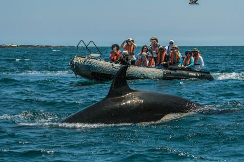 Whale watching at Punta Espinoza, Fernandina Island